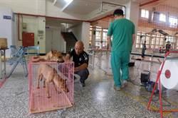暑假流浪犬增多 動保團體進行結紮人道減量