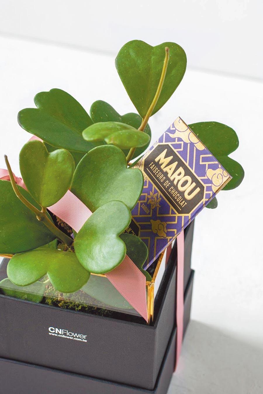 CNFlower x Marou心有所屬巧克力植栽禮盒,心葉毬蘭植栽+多樂70%黑巧克力Bar,原價2500元、特價2280元。(CNFlower提供)