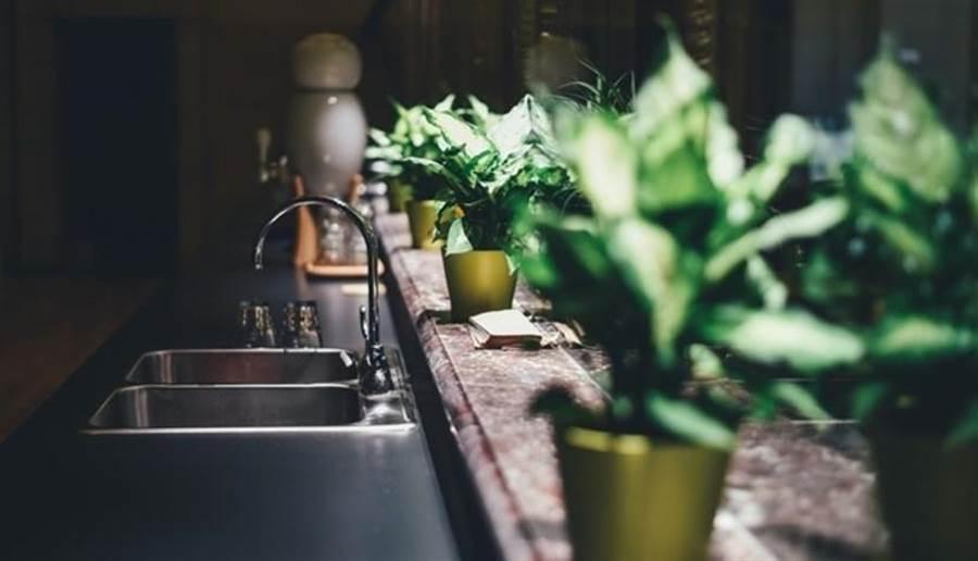 專家指出,對抗蟑螂除了用藥,還要用其它方式,例如誘捕或用吸塵器,但保持環境衛生才是根本之道。(圖/pixabay)