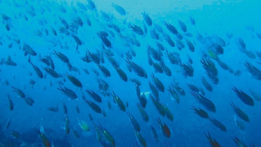 基隆市潮境公園海洋保育區,舉辦第二屆的「潮生態」海底影像展。(許家寧翻攝)