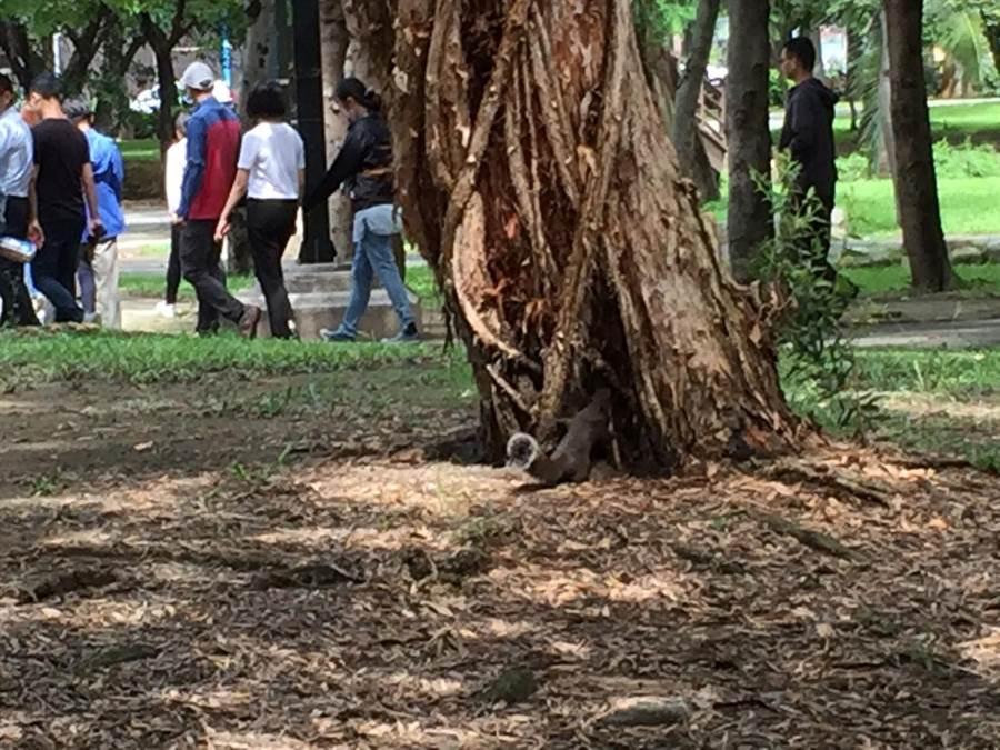 巴克禮公園即將重新開放。(台南市政府衛生局提供)
