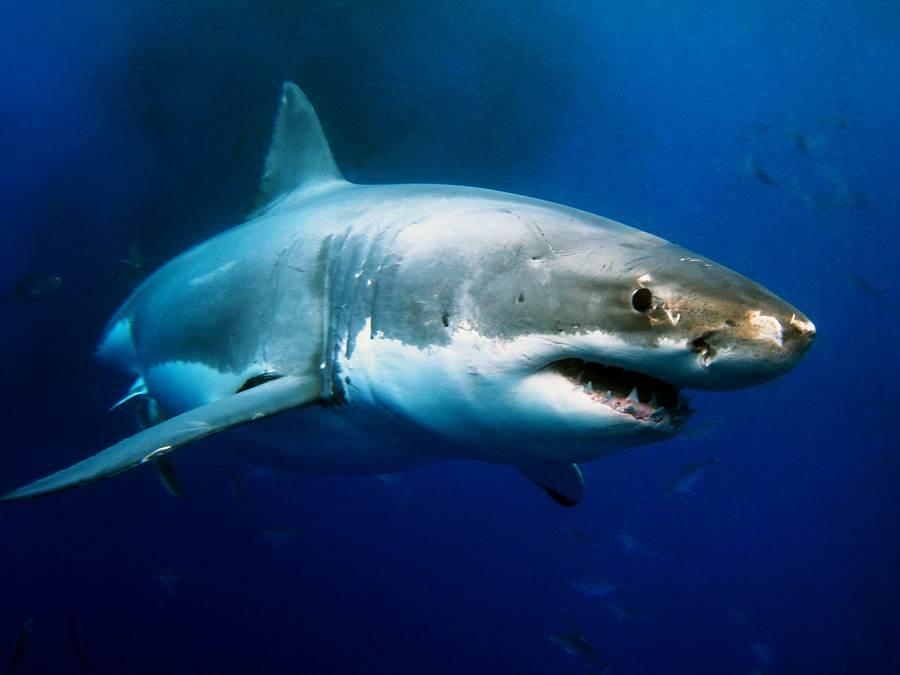 驚現1.8億年前巨鯊 比潛水艇還大(示意圖/達志影像)