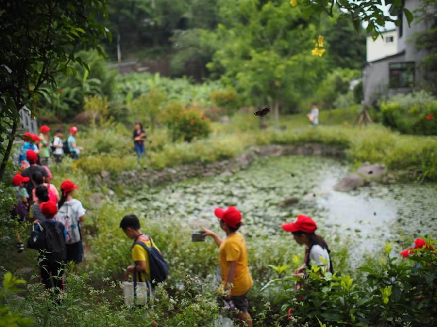 北埔鄉南外社區發展蝴蝶生態為特色,社區廣種蜜源植物,也有蝶形生態池。(莊旻靜攝)
