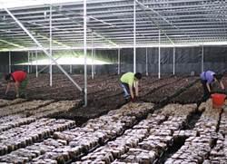 市議員為菇農請命爭取香菇產業與太陽能產業相結合