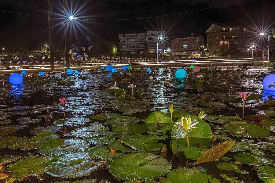 上林荷花田中睡蓮池全景。(圖取自新北市景觀處官網)