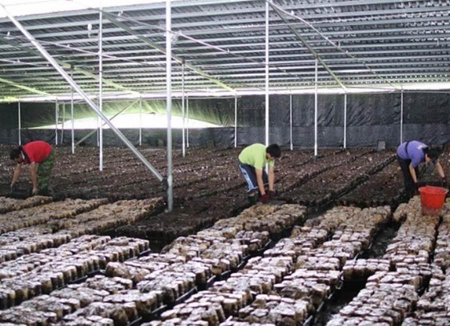 菇農請命爭取香菇產業與太陽能產業相結合,一舉數得。(陳世宗翻攝)