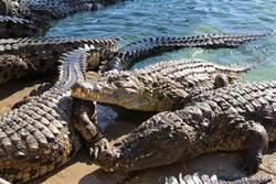 目睹鱷魚水中求歡 路人全看傻