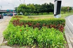 竹縣交流道周邊依四季栽種草花