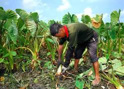 勞軍公教退休等實際從事農業工作 納入農民職業災害保險