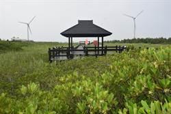 大安紅樹林生態豐富 里長盼建親海賞蟹步道
