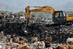 世界最大垃圾場 還養著比人大巨鳥