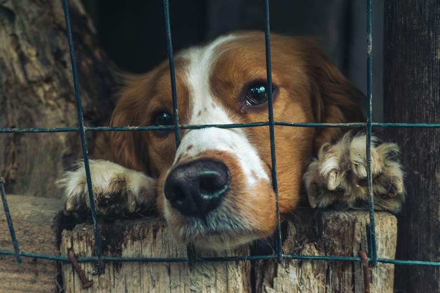 癌末翁含淚送養 愛犬反應眾人落淚(示意圖/達志影像)