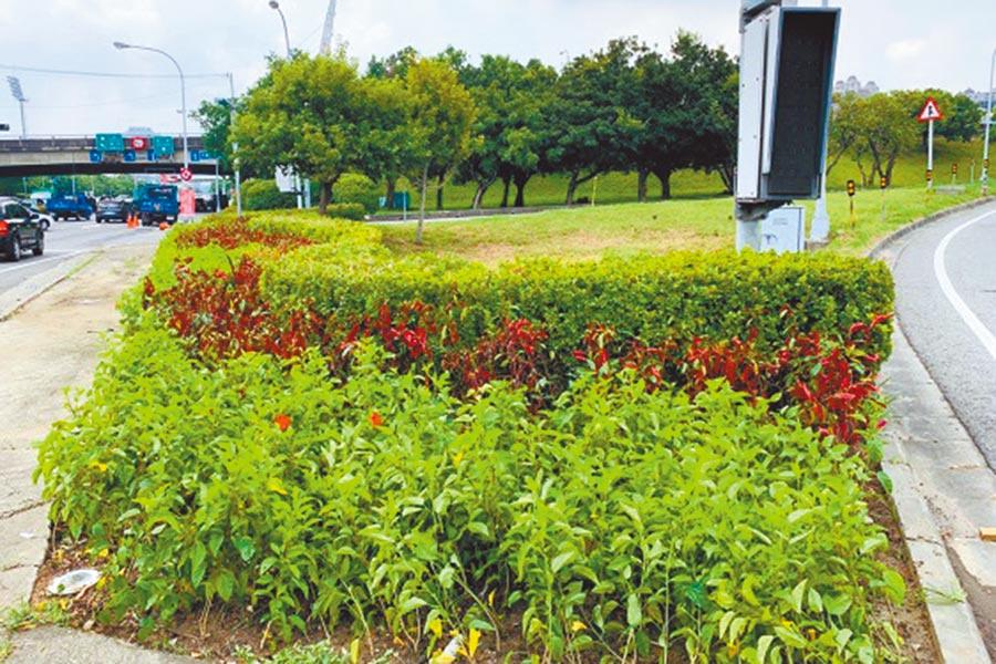 工務局在竹北交流道槽化島做綠美化。(羅浚濱攝)