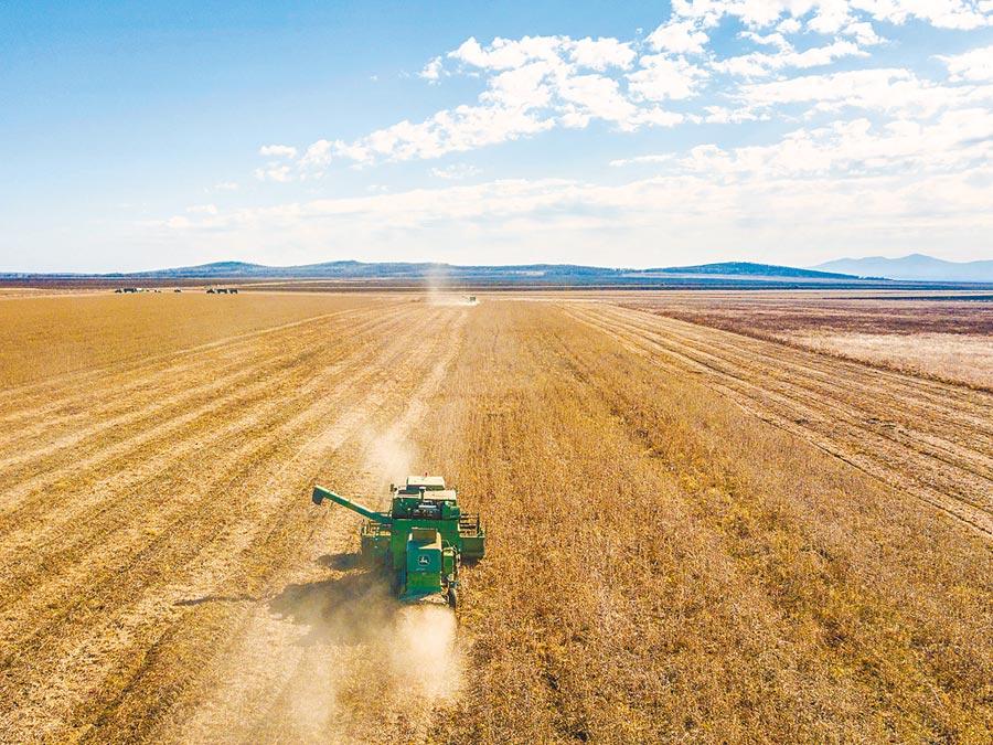 陸採購的首批4431.6噸俄羅斯大豆通關入境。圖為2018年10月19日,收割機在俄羅斯猶太自治州比羅比詹市附近的大豆農場作業。(新華社)