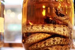 毒蛇泡酒3個月喝光 一戳竟復活咬人
