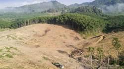 地球之肺大萎縮! 亞馬遜雨林砍伐率上升278%