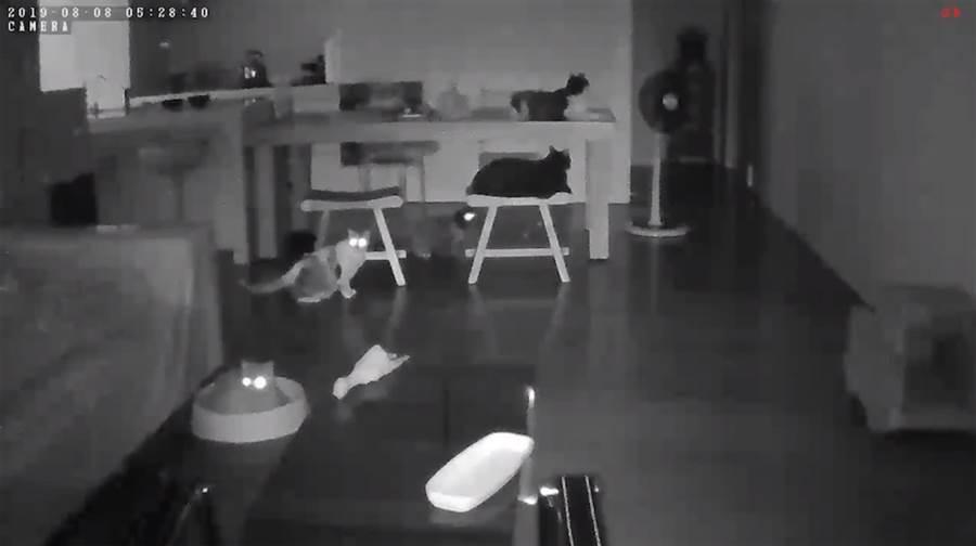 當時睡在客廳的5隻貓全都嚇壞了。(圖/臉書粉專「小跑貓嗚嗚」授權提供)