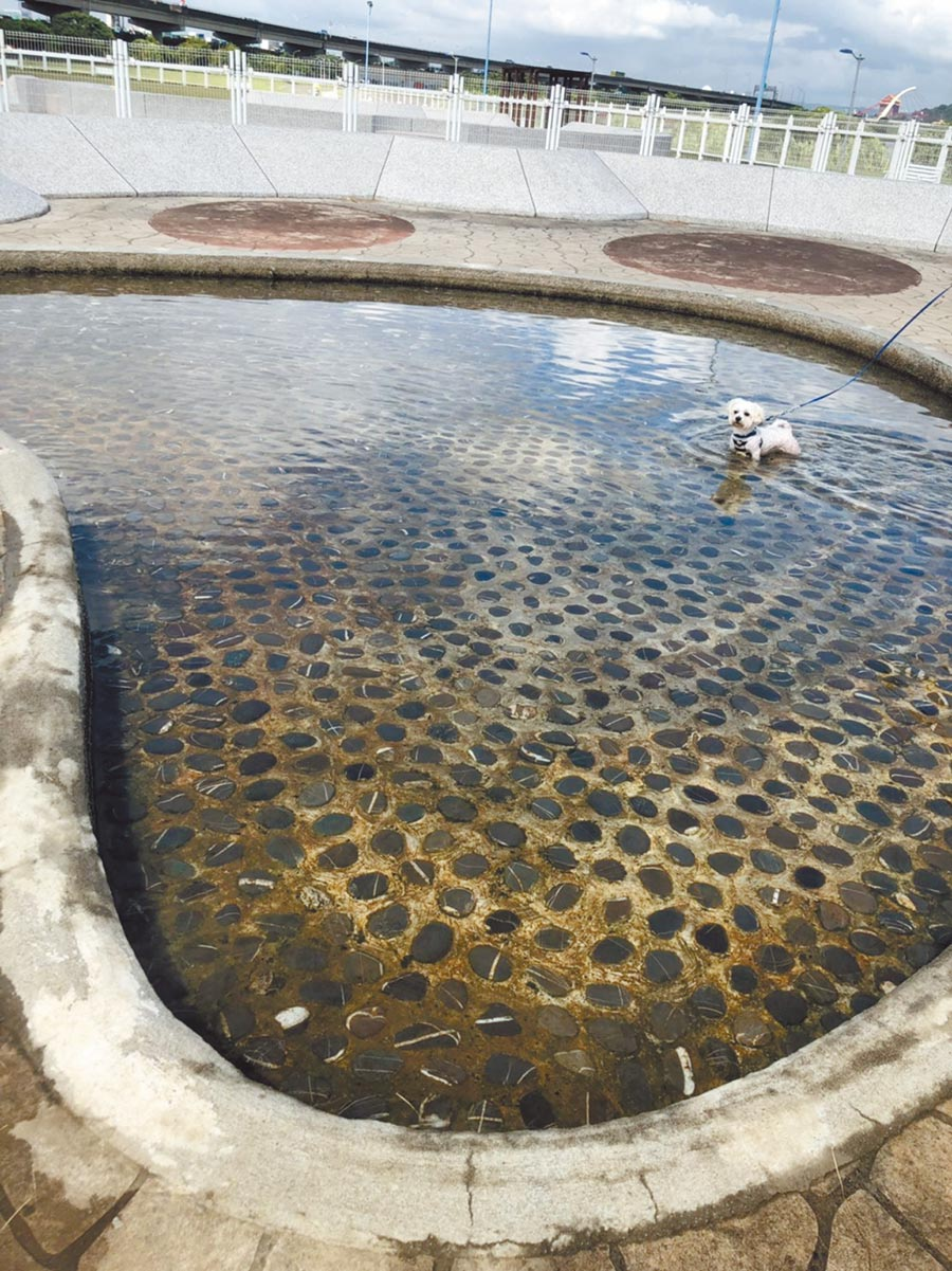 王鴻薇開記者會前,動保處先請廠商將水池的水換過,因此還不算太髒。(王鴻薇議員研究室提供)