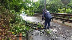 利奇馬路過 基隆七堵樹倒最慘重