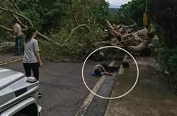 颱風吹倒陽明山路樹  男騎機車遭壓輕傷