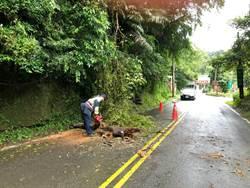6尺路樹遭颱風吹斷 警民合力清除
