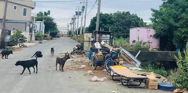 和美鎮嘉佃路712巷聚流竄著數十條野狗,處處都是廢棄物和垃圾。(吳敏菁翻攝)