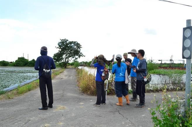 今年度的水雉夏季繁殖調查,發現水雉族群數量穩定成長,數量達1024隻,首次於夏季超過1000隻。(水雉生態教育園區提供)