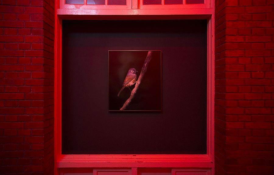 拉斐爾.伊凡斯的《魔鬼之鳥,鳥占術》。(圖取自當代館官網)