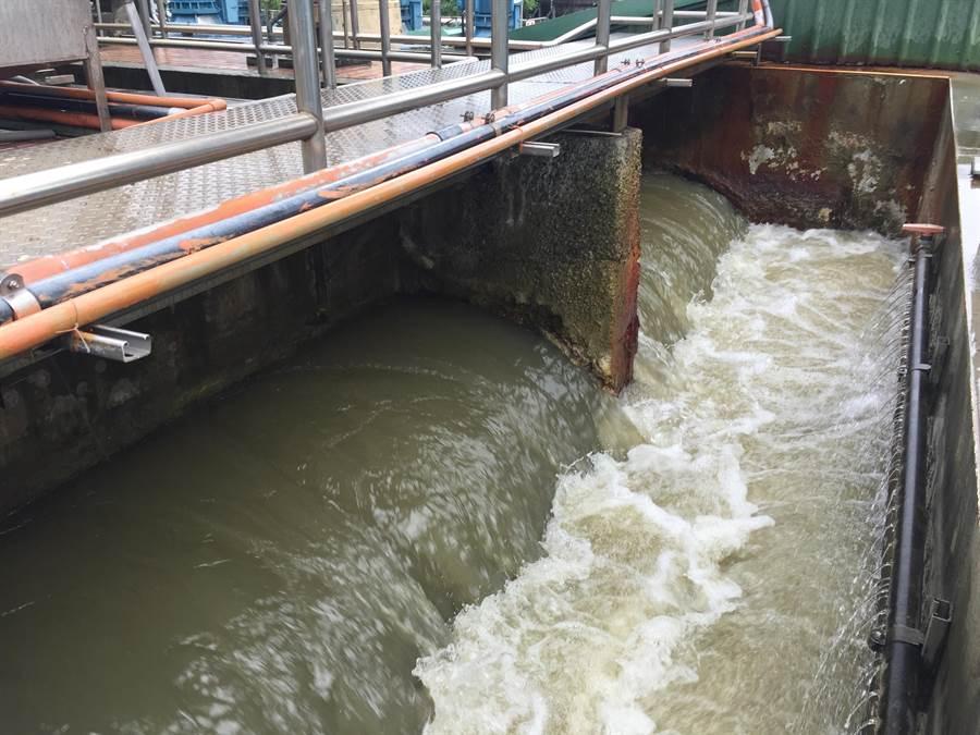 大甲溪原水濁度約在30度左右,雖比平時略為上升,但還不致影響豐原淨水廠效能。(王文吉攝)