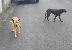 黑韓連狗也不放過 三隻家犬無辜遭殃