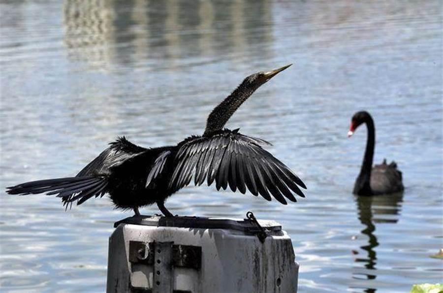 專家認為,香港目前動亂局勢有可能成為市場「黑天鵝」。示意圖。(美聯社)