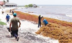 海藻重創墨國觀光