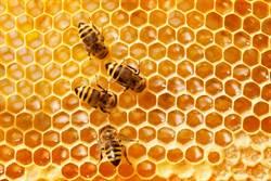報廢車內築滿蜂巢!驚人影片曝光