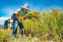 農地環境給付 挨轟政策買票