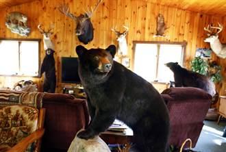 闖空門被抓包 野熊嚇到牆上撞出大洞