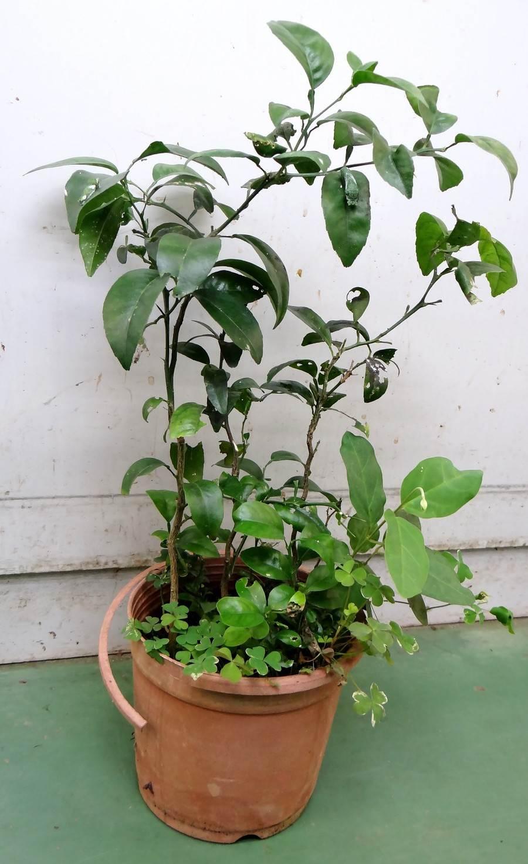 住家的花和盆栽、舒適幽暗的角落,是節肢動物最愛躲藏的環境。(台北市立動物園提供)