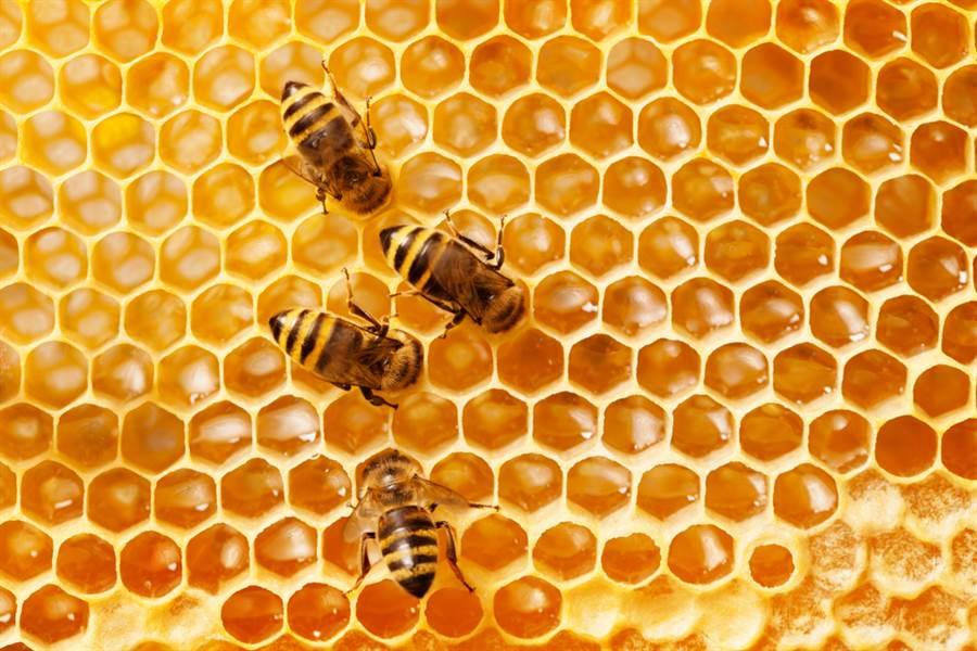 報廢車內築滿蜂巢!驚人影片曝光(示意圖/達志影像)