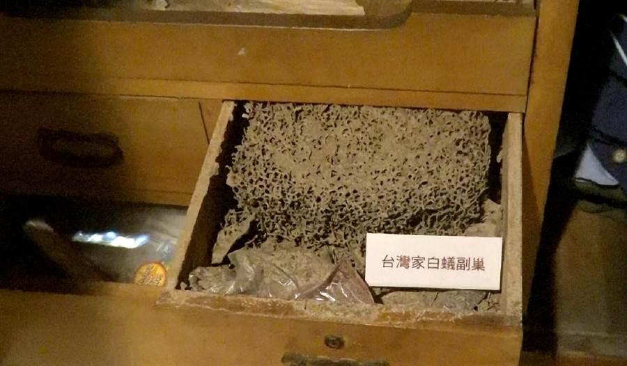 家中木製抽屜,是白蟻最佳的藏身處,台北市立動物園舉辦「我家蟲住民」特展,提供民眾認識家中蟲蟲的新知。(台北市立動物園提供)