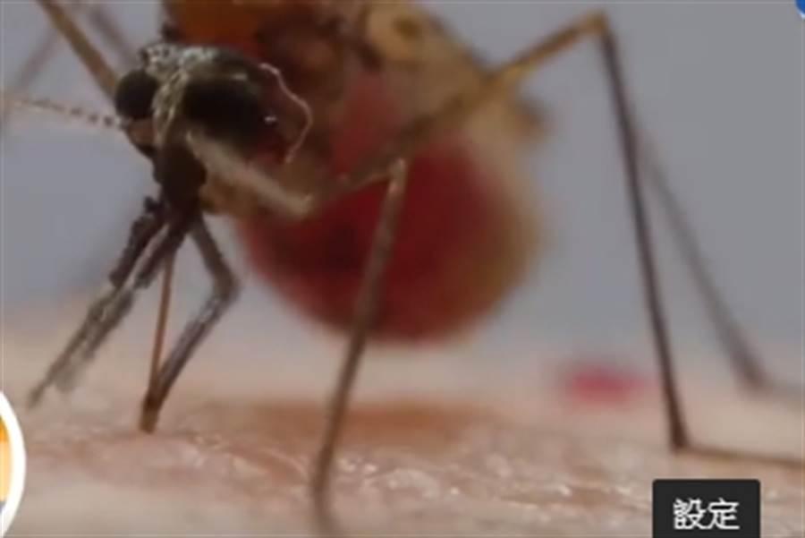 《樂活有方》蚊風色變 炎夏心機大作戰