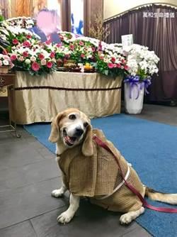忠犬穿喪服參加主人葬禮 一個月後...結局讓萬人淚崩
