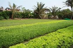 中南部豪雨釀災 落花生、玉米、葉菜已見農損