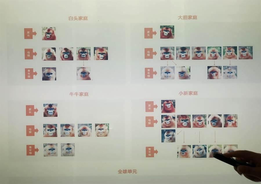 大龍潭金絲猴的家族與名字一覽表。(王雅芬/攝)