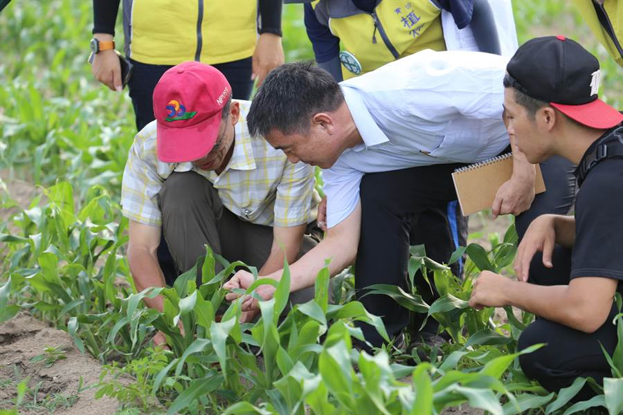 屏科大教授陳文華(左)帶領4所大學實習植物醫生團隊跨海協助防治秋行軍蟲。(縣府提供)