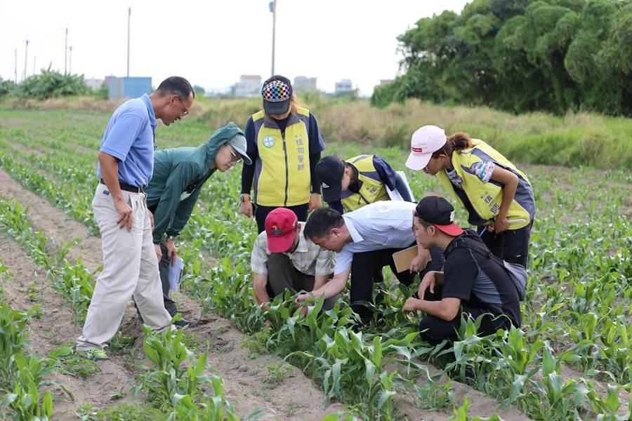 防檢局委請台灣大學、中興大學、嘉義大學及屏東科技大學4所有植物醫學與昆蟲相關科系的師生團隊協助防治工作。(縣府提供)