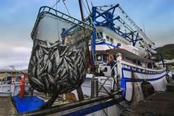 瑞芳歡慶漁民節!慰勞漁民、美味小卷促觀光