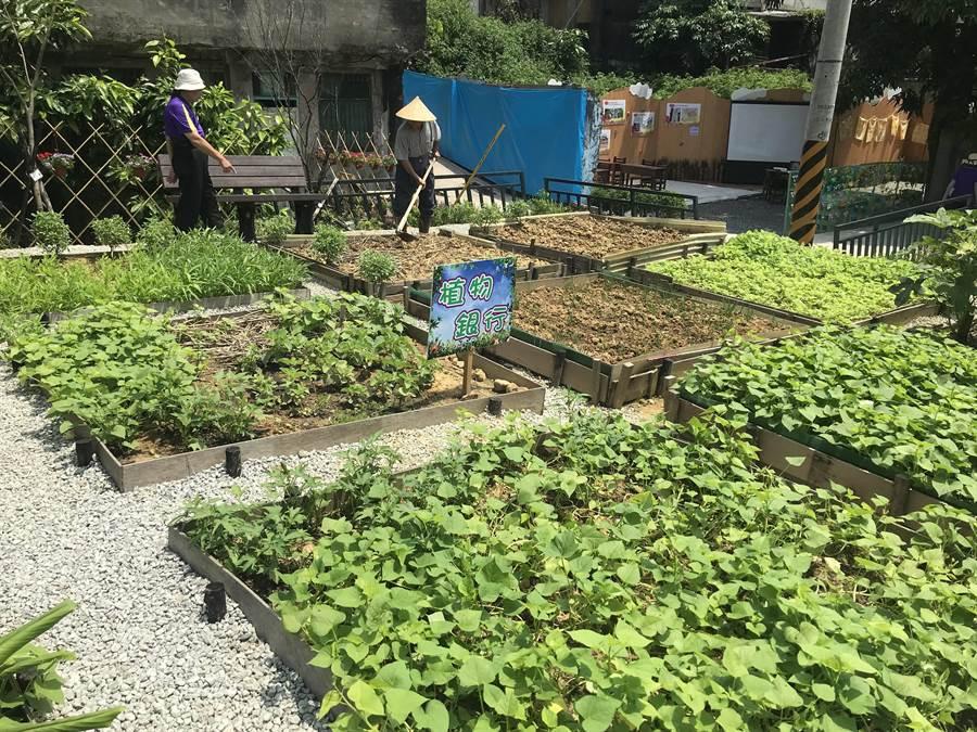 志工們在基隆市中山區居仁里的空地,耕種農作物,打造出「植物銀行」。(張穎齊翻攝)