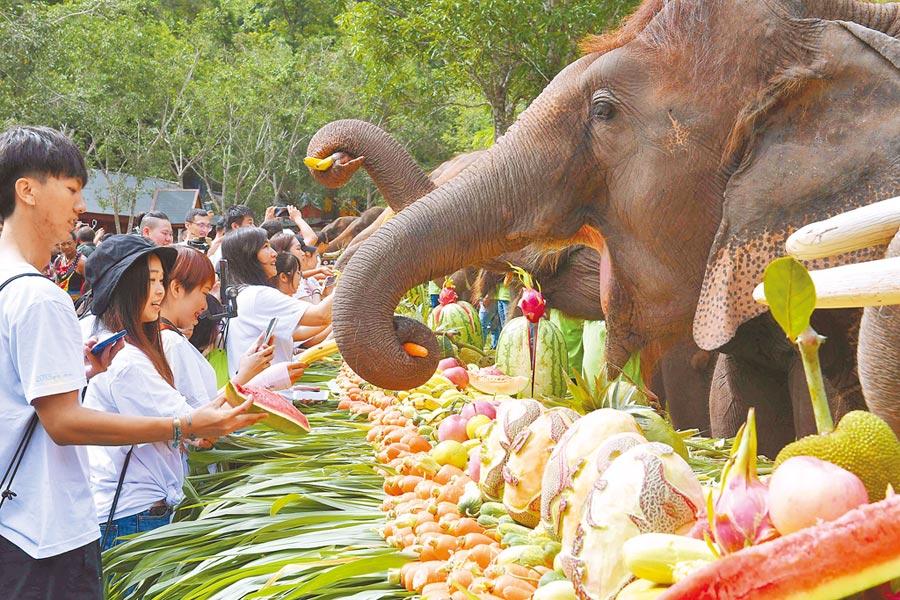 民眾在西雙版納傣族自治州野象谷景區給亞洲象餵食。(新華社)