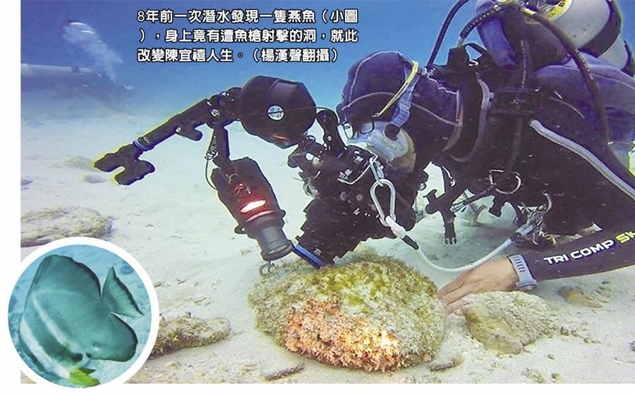8年前一次潛水發現一隻燕魚(小圖),身上竟有遭魚槍射擊的洞,就此改變陳宜禧人生。(楊漢聲翻攝)