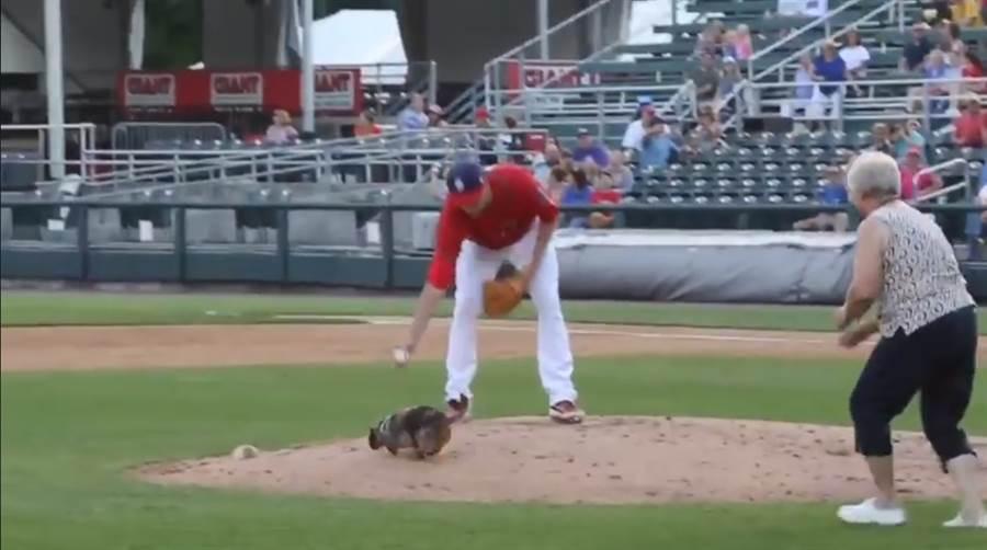 臘腸狗闖進小聯盟球場,阿嬤在後頭苦追。(截自小聯盟臉書)