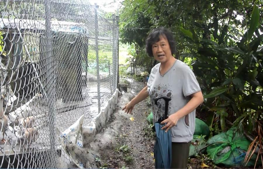 沈太太指出日前為防治石虎吃家禽,與保育協會合力架設的鐵網,一旁果園也頻遭獼猴撒野。(巫靜婷攝)